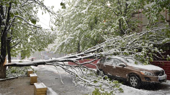 Numărul copacilor doborâţi de zăpadă creşte în permanenţă. Situaţia în Chișinău ca urmare a condițiilor meteo (FOTO)