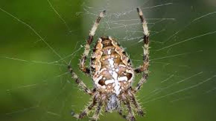 STUDIU: Metoda prin care poate fi tratată frica de păianjeni
