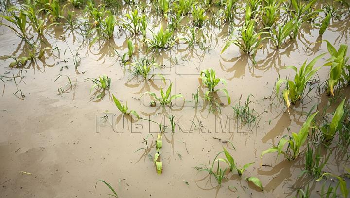 PERICOL DE INUNDAŢII a terenurilor agricole în satul Costeşti. Localnicii stau cu frica în sân