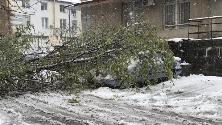 Sute de arbori smulşi din rădăcini, străzi închise şi cartiere fără electricitate! Situaţia în Chişinău LA ORA ACTUALĂ