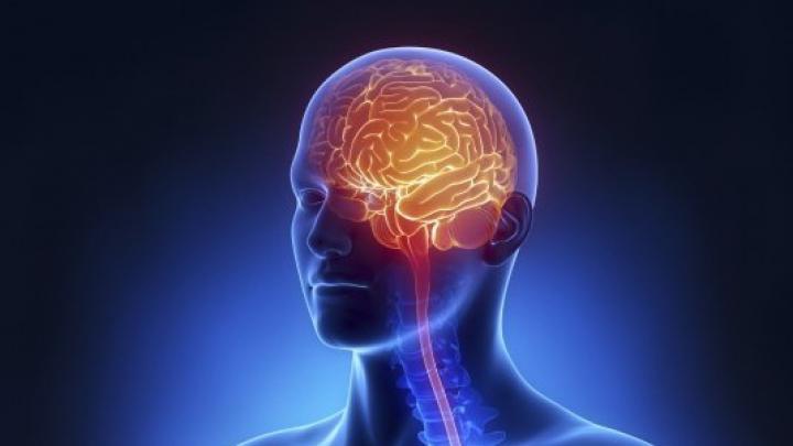 Viermele parazit care invadează creierul. Boala se răspândeşte într-un ritm îngrijorător
