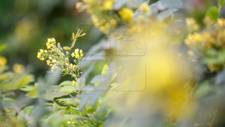 Mesaje şi urări de Florii. Cum poți să surprinzi pe cineva drag cu un SMS