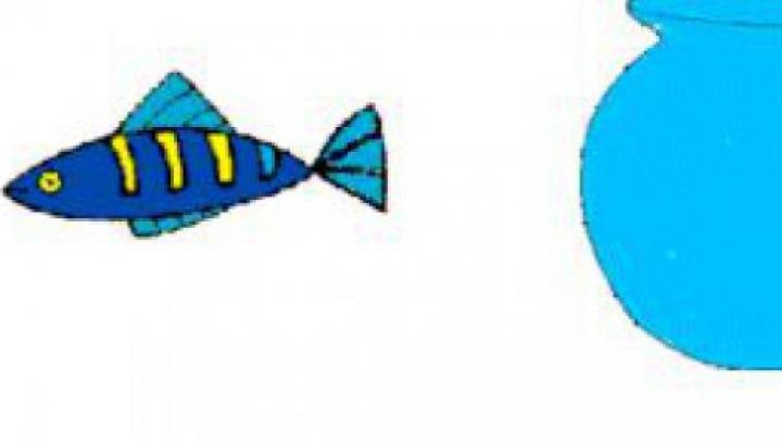 Iluzia care face FURORI PE INTERNET. Ce se întâmplă dacă privești câteva secunde peștele din desen