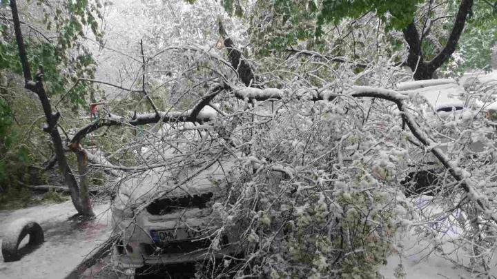 O maşină, STRIVITĂ de copaci pe o stradă din sectorul Botanica (GALERIE FOTO)