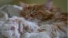 UIMITOR! Cum arată cea mai lungă pisică din lume (FOTO)