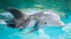 Reproducerea delfinilor și orcilor în captivitate, strict interzisă în Franța