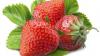 LifeStyle: Cum să păstrezi fructele şi legumele proaspete mai mult timp