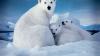 Descoperire alarmantă a cercetătorilor: Ocean Arctic ar putea rămâne fără gheață în 23 de ani
