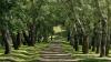 BNS: Vadul lui Vodă, cel mai verde oraş din Moldova. Care localitate e la polul opus şi ce spun oamenii