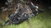 ACCIDENT TERIFIANT la Cantemir: O persoană moartă şi un rănit, după ce maşina în care se aflau s-a răsturnat