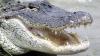 O fetiță a scăpat din fălcile unui aligator datorită unui sfat învățat într-un parc de atracții
