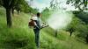 De astăzi încep lucrările de dezinsecție aeriană a pădurilor din țară
