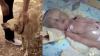 NO COMMENT! Un bebeluş ÎNGROPAT DE VIU, salvat de la moarte de un câine (VIDEO)