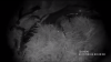 """Trei braconieri au fost """"pescuiţi"""" de inspectorii Serviciului Piscicol după o cursă pe Nistru (VIDEO)"""