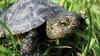 Sute de broaşte ţestoase, confiscate. Vietățile marine au fost sechestrate în aeroportul din Kuala Lumpur