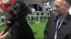 """""""Câinele de Palmier"""". Patrupezii au luat locul vedetelor de pe covorul roşu de la Cannes"""