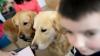 STUDIU: Câinii sunt capabili să proceseze cuvintele pe care le învaţă de la oameni