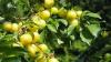 TREBUIE SĂ ŞTII! Fructele care îmbunătățesc memoria