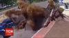 NO COMMENT! Momentul în care o ţeavă cu apă caldă EXPLODEAZĂ în Kiev (VIDEO)