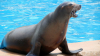 Un copil din Canada, ATACAT şi tras în apă de un leu de mare