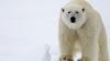 Polul Nord se va muta în Europa! Predicţiile ALARMANTE ale ştiinţei