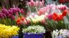 Ultimul sunet profitabil pentru comercianţii de flori. Elevi şi părinţi au stat în rând la piaţa de pe Calea Basarabiei