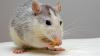 Să vezi şi să nu crezi! Şoarecii au mâncat două tone de nuci confiscate de vameşii ucraineni (VIDEO)