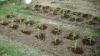 Gospodarii au început să planteze răsaduri în grădini. Cât costă plantele la piaţă