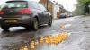 PROTEST INEDIT! Rațele SEMNALIZEAZĂ gropile din asfalt. Şoferii, UIMIŢI! Ce spun consilierii locali