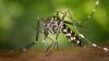 Cinci moduri în care te poţi proteja de muşcăturile ţânţarilor
