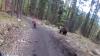 Au dat nas în nas cu ursul. Un urs le-a tăiat calea unor ciclişti pe un traseu periculos din Slovacia (VIDEO)