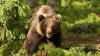 UIMITOR! Reacția unui urs care s-a speriat de râsul unui clovn (VIDEO)