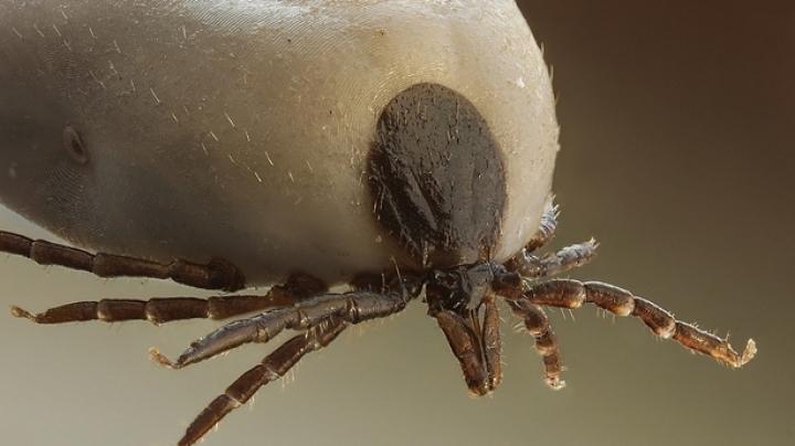 ATENŢIE LA CĂPUŞE! Specialiştii ne avertizează că insectele ne pot strica picnicurile