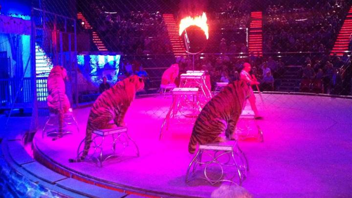 România: Circul nu va mai avea voie să folosească animale sălbatice în spectacole