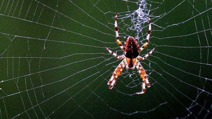 De ce este PĂCAT să omori păianjenii. Dezvăluirile care te vor pune pe gânduri