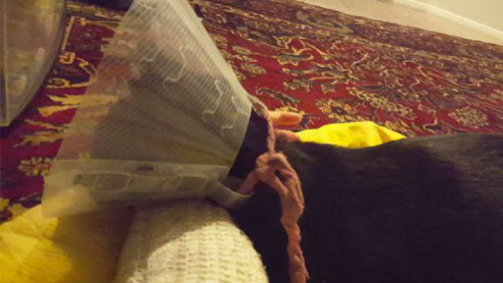 Ce a găsit un veterinar în burta unei pisici? Stăpâna ei a fost STUPEFIATĂ (FOTO)