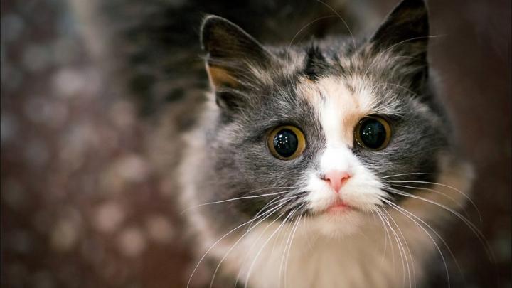 """""""Pisicii la birou"""": Terapia prin torsul pisicilor intră în birourile marilor companii din Tokyo"""