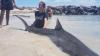 """Un băiat de 15 ani a devenit SPAIMA rechinilor! Autorităţile sunt îngrijorate de """"pasiunea"""" acestuia"""
