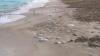 Invazie de meduze în Egipt. Turiștii și localnicii sunt speriați (FOTO)
