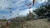 Invazie apocaliptică de lăcuste în Rusia: Insectele distrug toate culturile care le stau în cale