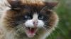 O femeie din Bugeac a fost muşcată de pisica sa TURBATĂ
