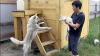 Prima întâlnire dintre un câine clonat şi mama lui (VIDEO)