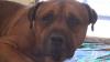 EMOŢIONANT! Un câine plânge în hohote, după ce stăpânii l-au abandonat