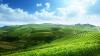 Cât este de important verdele în viaţa noastră