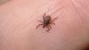 Descoperire fabuloasă făcută de oamenii de ştiinţă despre Boala Lyme