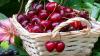 Cireșele, fructele-vedete ale unui festival organizat în Ruseștii Noi. A răsunat muzică şi a mirosit a bucate alese