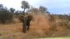 NO COMMENT! O turmă de elefanți adoptă un pui orfan, abia salvat (VIDEO VIRAL)