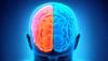 STUDIU: De ce stângacii sunt mai inteligenţi decât dreptacii