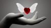 Lucruri INTERESANTE despre iubire, dar mai puţin cunoscute