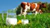 Studiu. Copiii care nu beau lapte de vacă riscă să rămână mai scunzi cu un centimetru